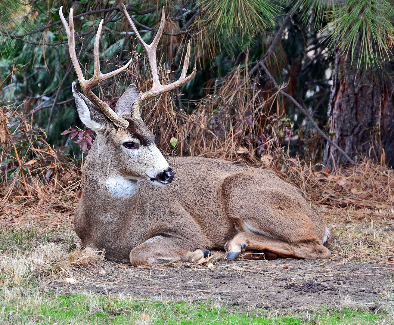 Let the reindeer games begin… « Ashland Daily Photo