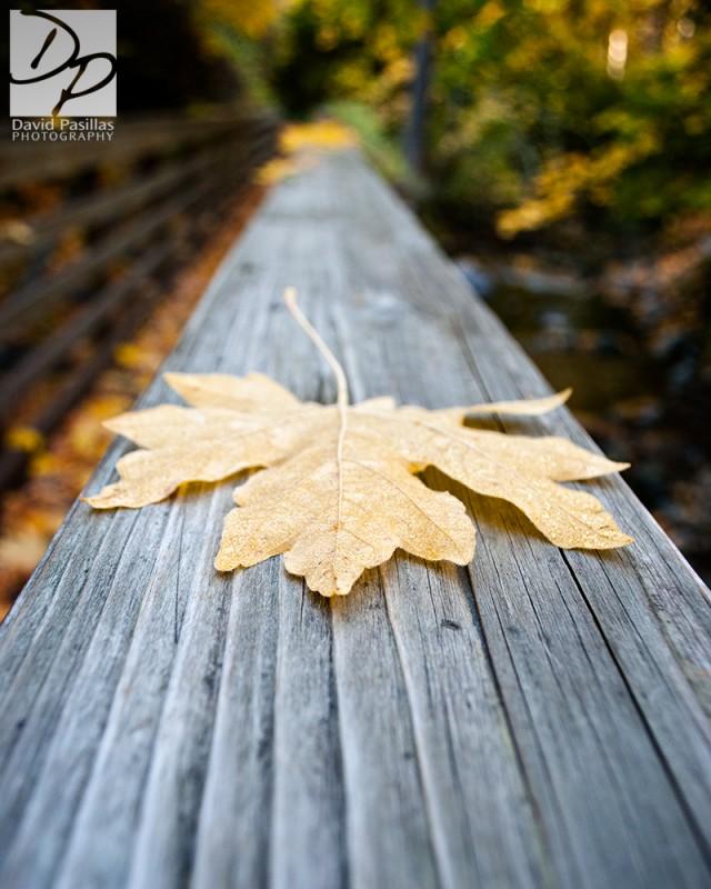 Leaf on a rail David Pasillas ashland oregon
