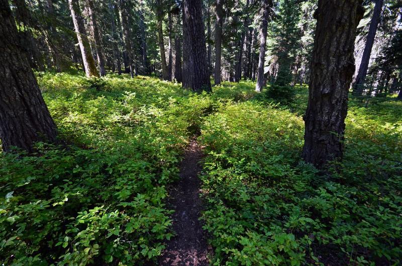 pacific crest trail brown mountain oregon