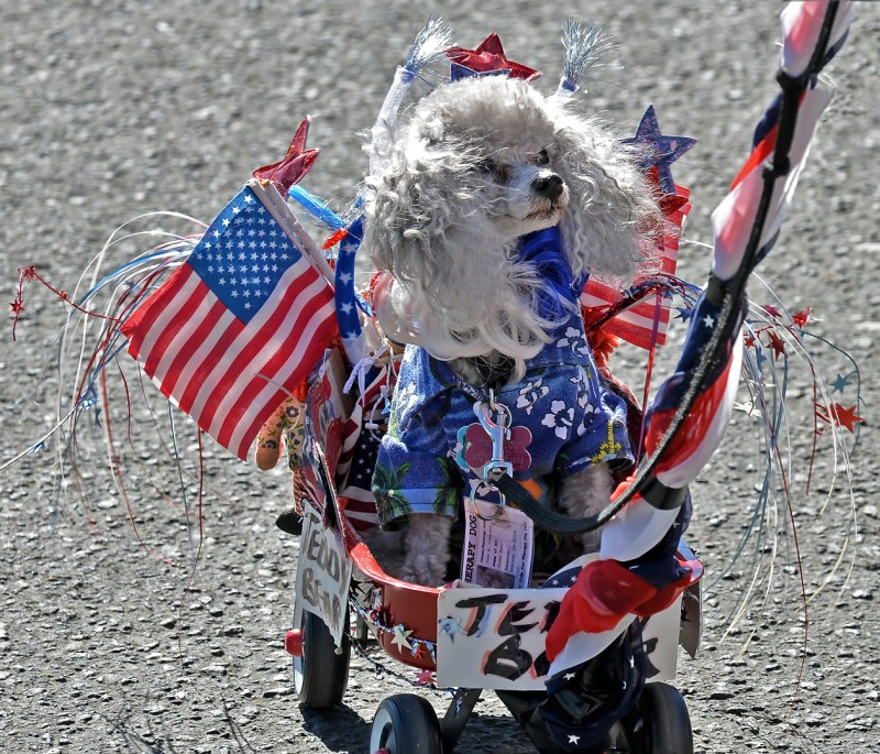 dog dress up decorations independence day fourth of july