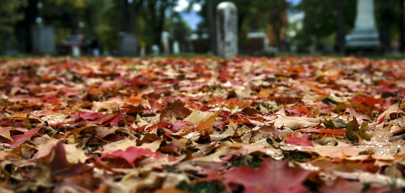 red orange leaves gravestones peanuts halloween fall autumn foliage