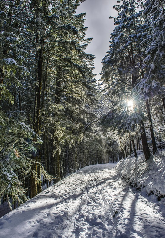Photo of the Year 2012 - Top 100 snow ashland oregon