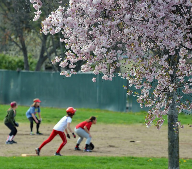 spring softball girls cherry blossoms