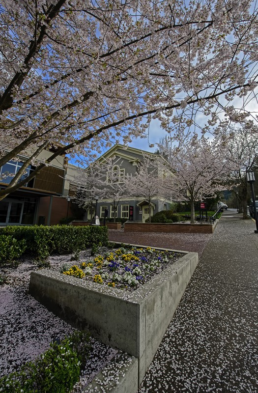 osf blossoms
