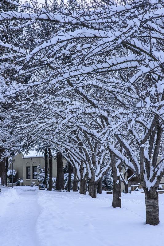 snow tree tunnel churchill hall sou campus