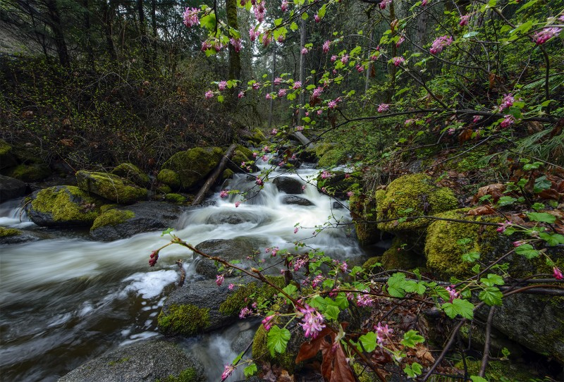 photomerge focus stack fairy ponds lithia park ashland oregon
