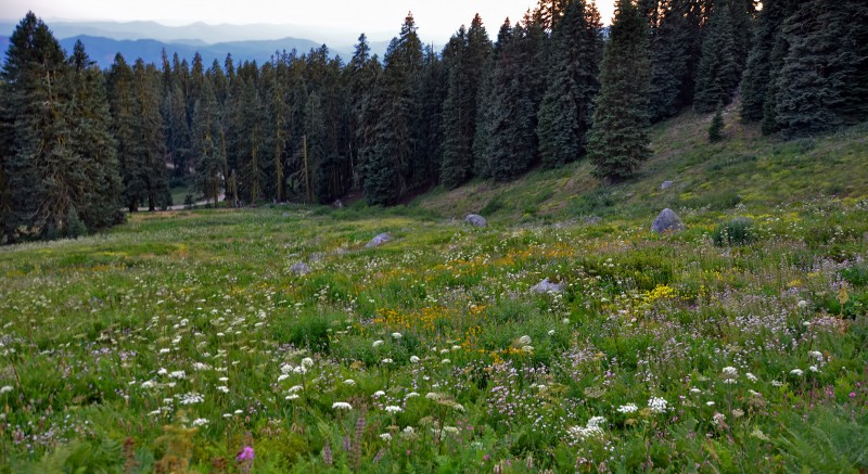 mount ashland wildflowers oregon siskiyou mountain range