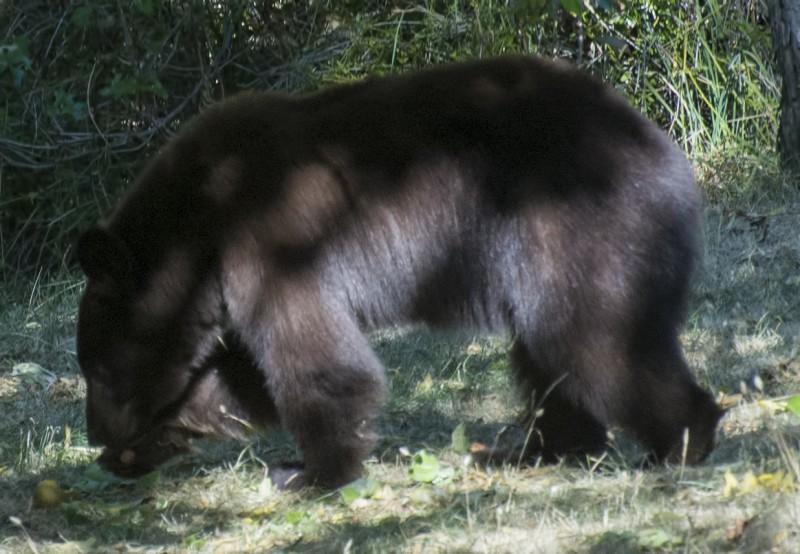 149_3026 RAW bear ashland