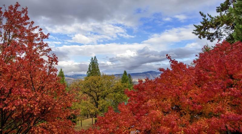ashland fall foliage autumn japanese maples