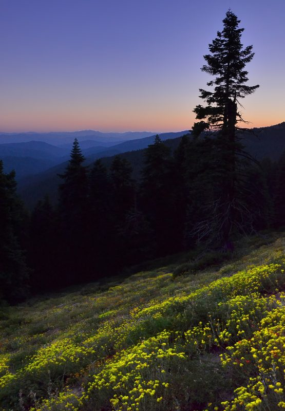 wildflowers-mt-ashland-sunset