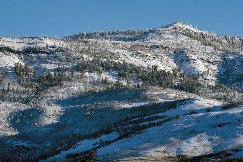 white christmas grizzly peak