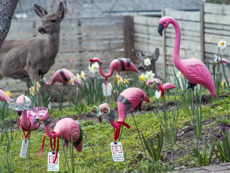 aiff film festival al case deer pink flamingo lawn ornaments