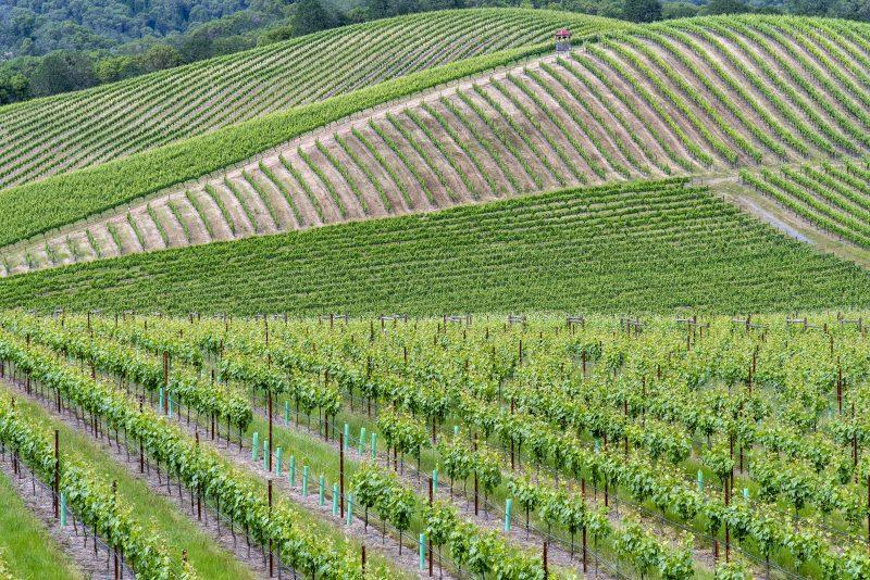 Abacela roseburg vineyard