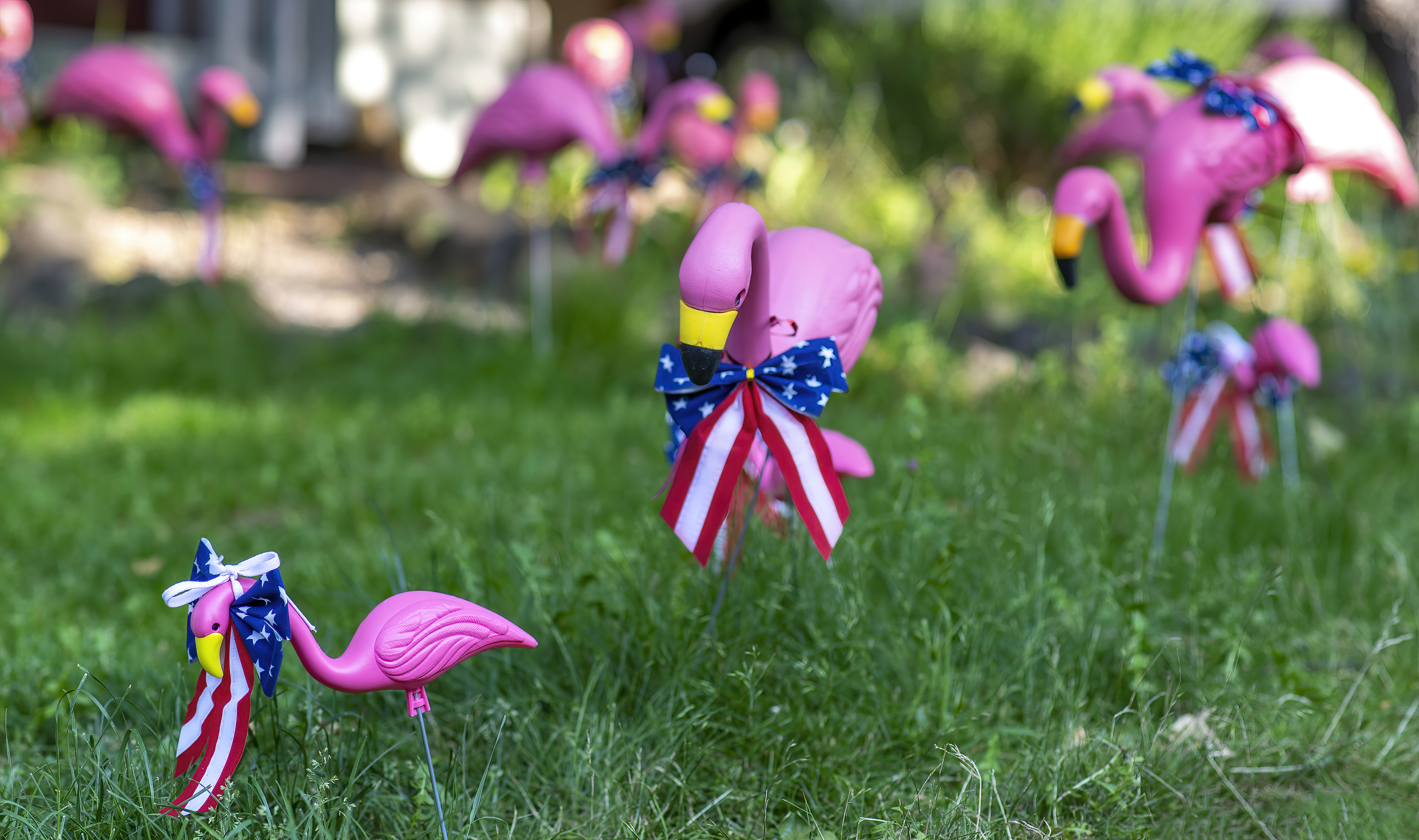 pink flamingos lawn ornaments fourth july 4 topaz denoise ai-denoise