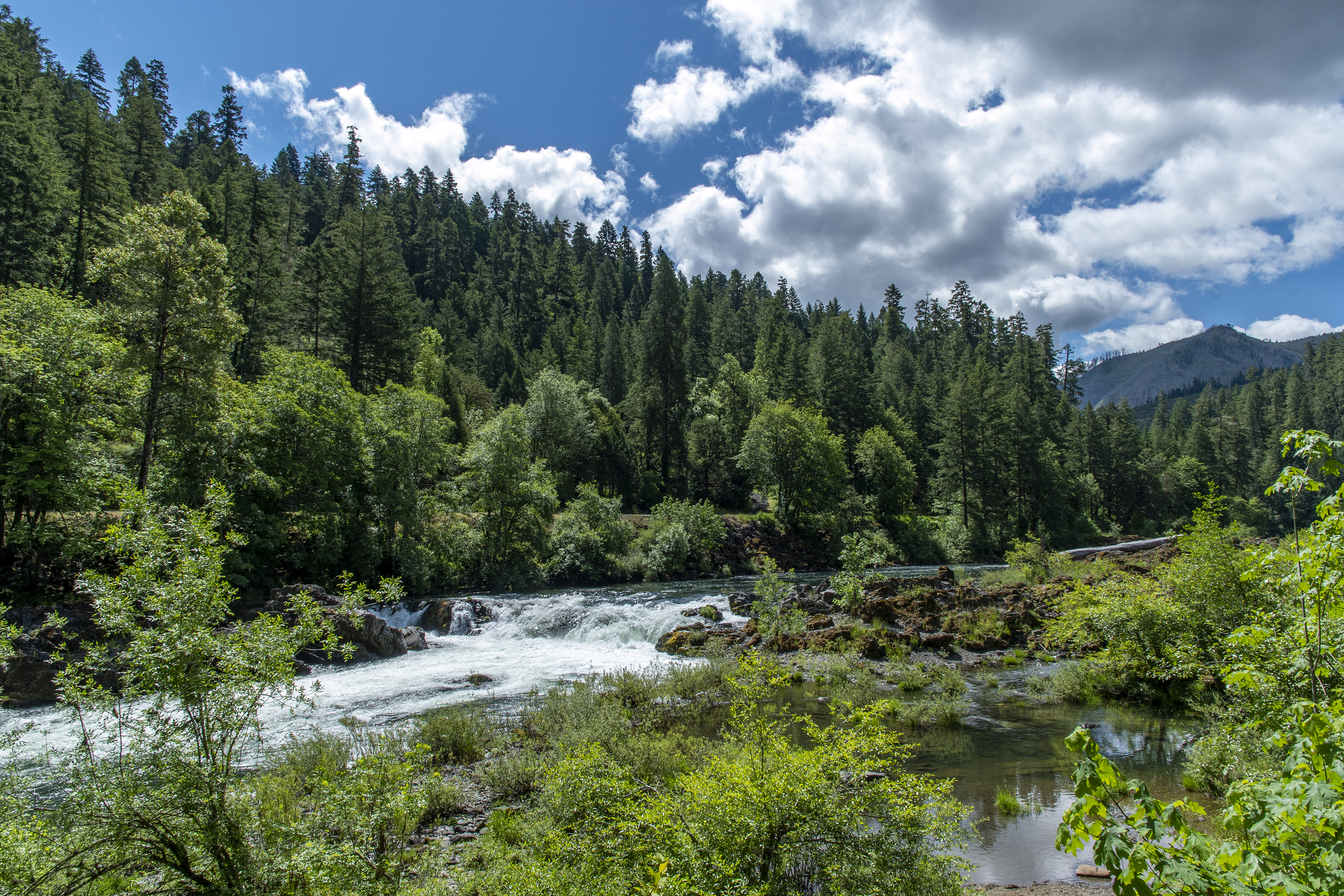 Swiftwater Trail north umpqua river deadline falls