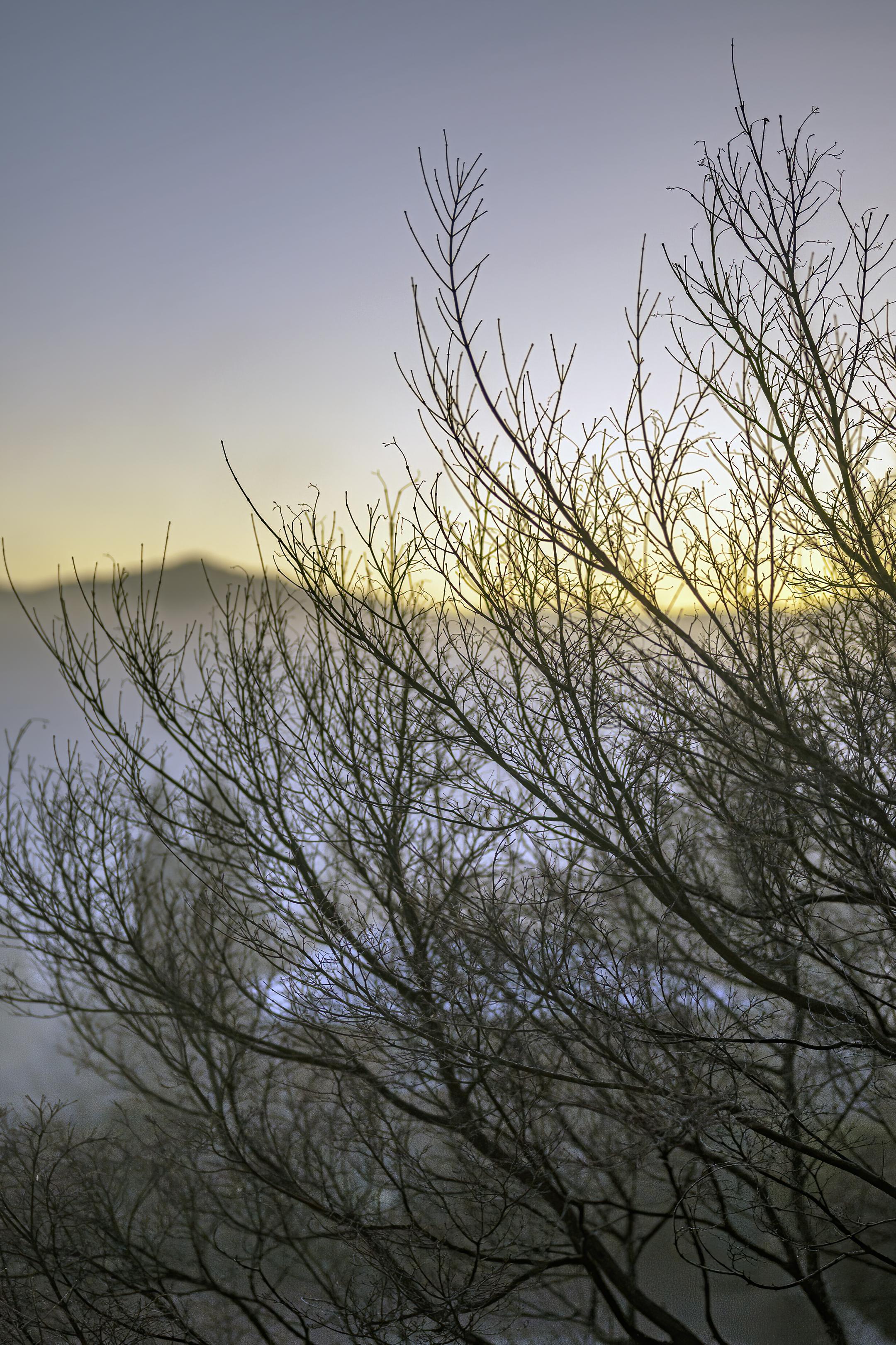 fog frost december morning ashland oregon-denoise-denoise