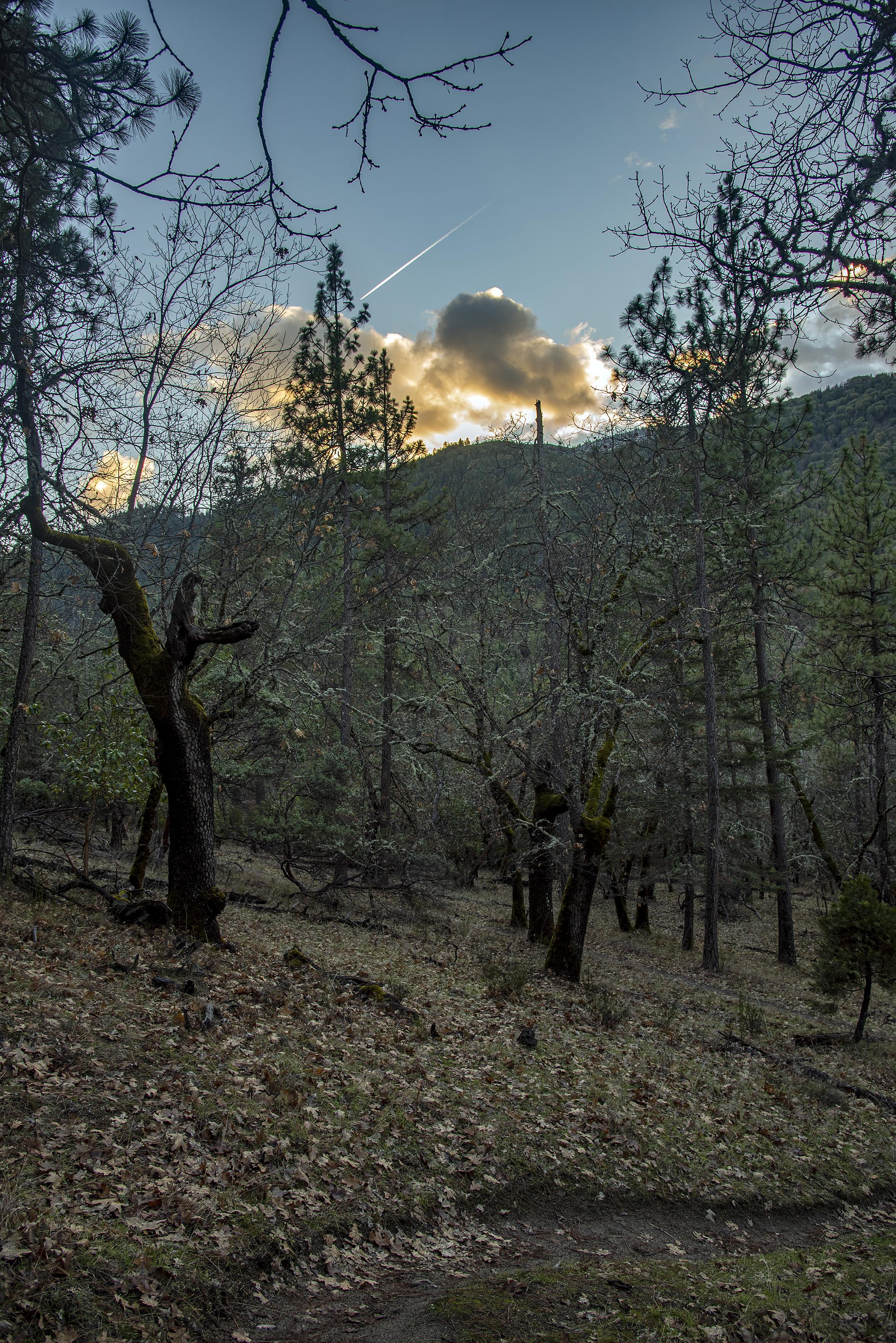 lithia park ashland trails oregon