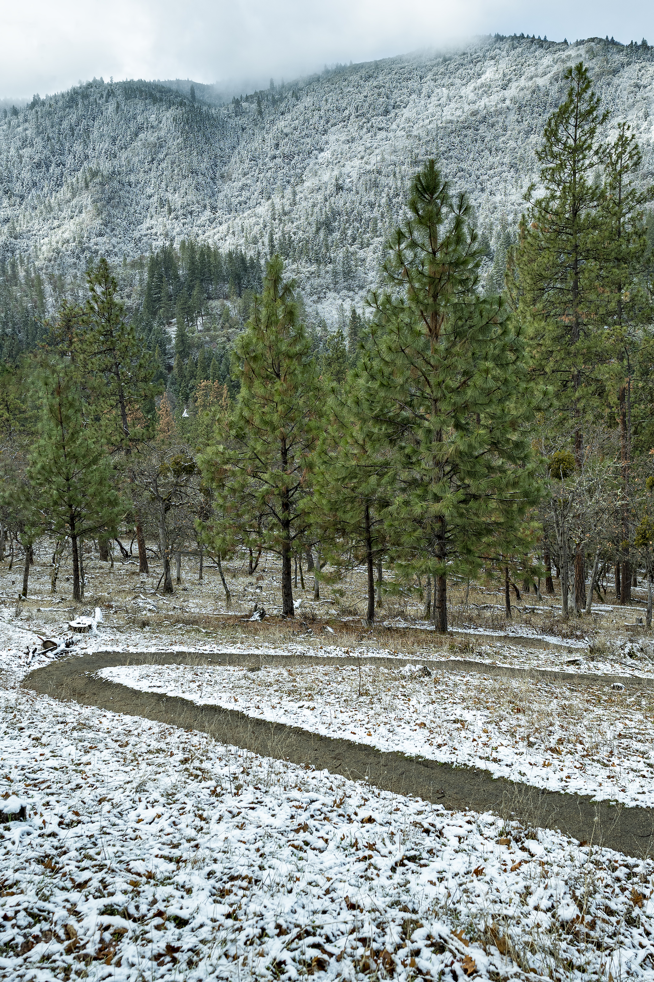 trail to lithia park snow winter ashland