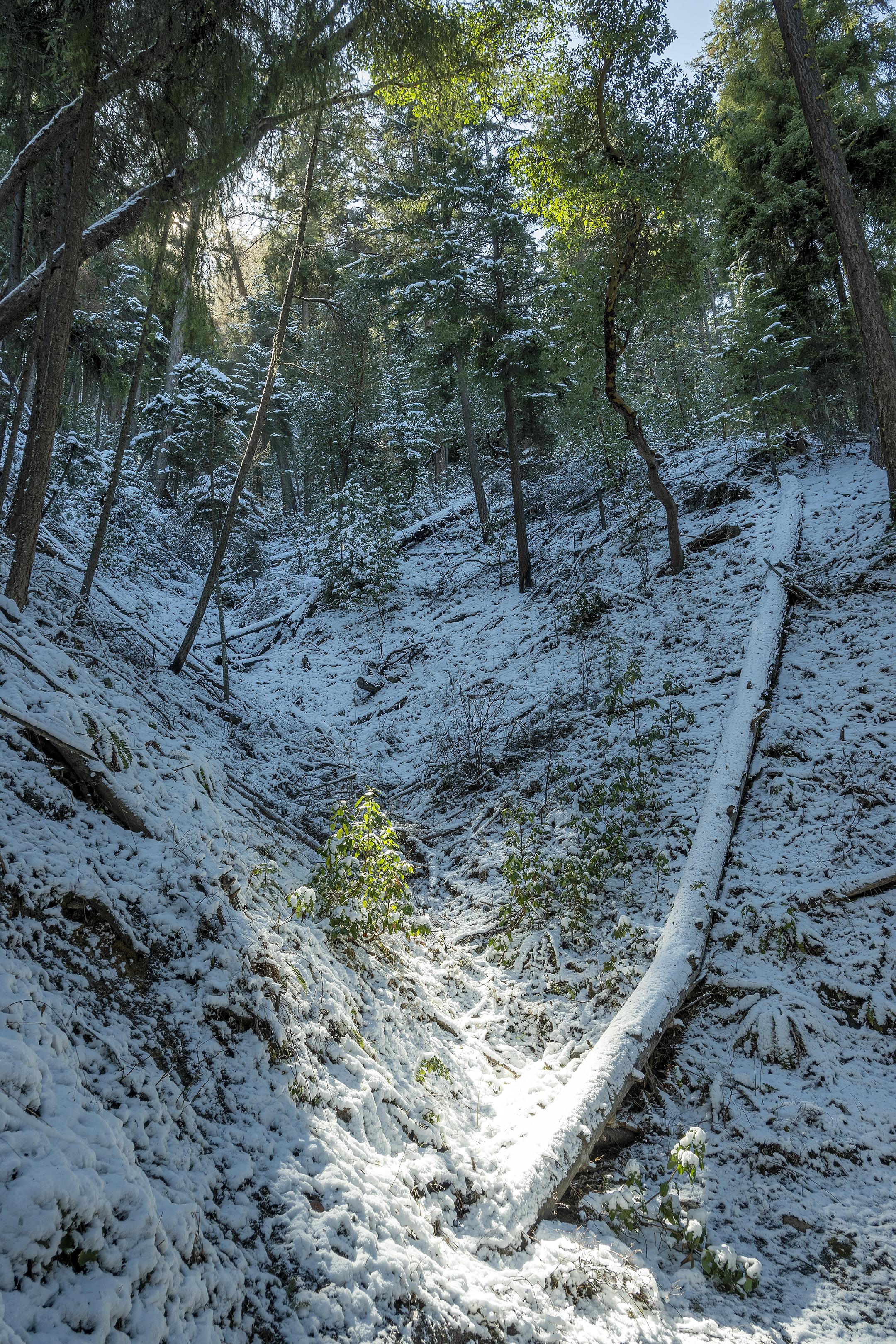 toothpick trail snow