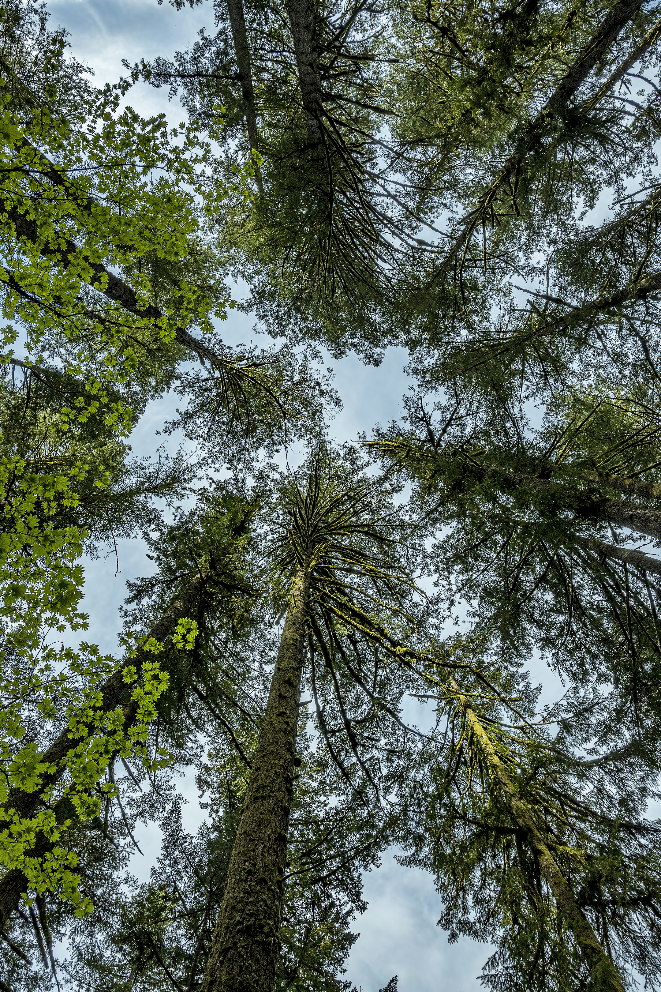 silver falls state park trees