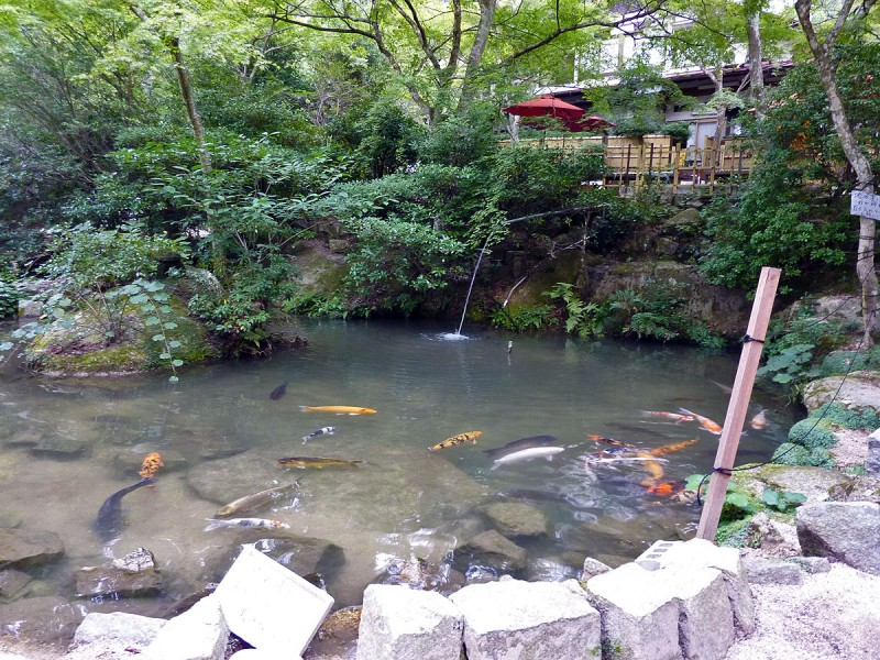 miyajima tea house koi carp pond japanese garden