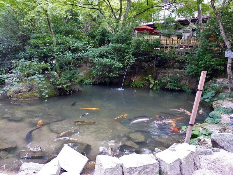 miyajima tea house koi carp pond japanese garden