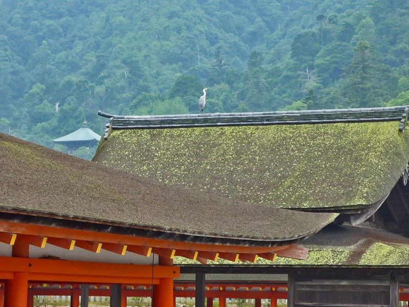 japanese crane on roof of miyajima shrine