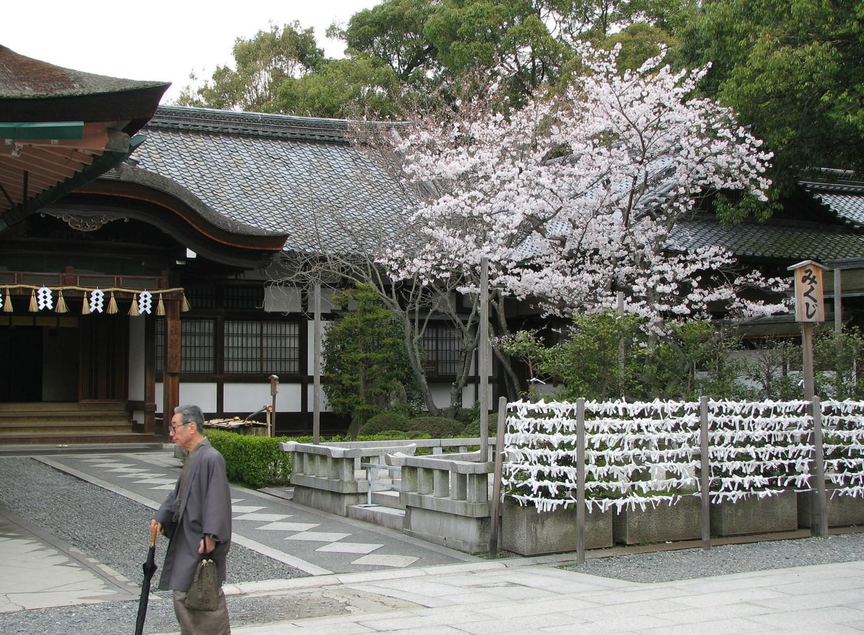 Fushimi Inari Taisha 伏見稲荷大社 mikuji sakura