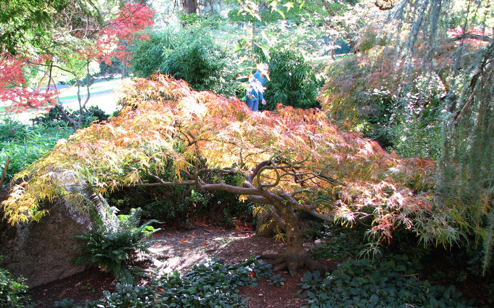 Japanese Gardens Lithia Park Ashland Oregon
