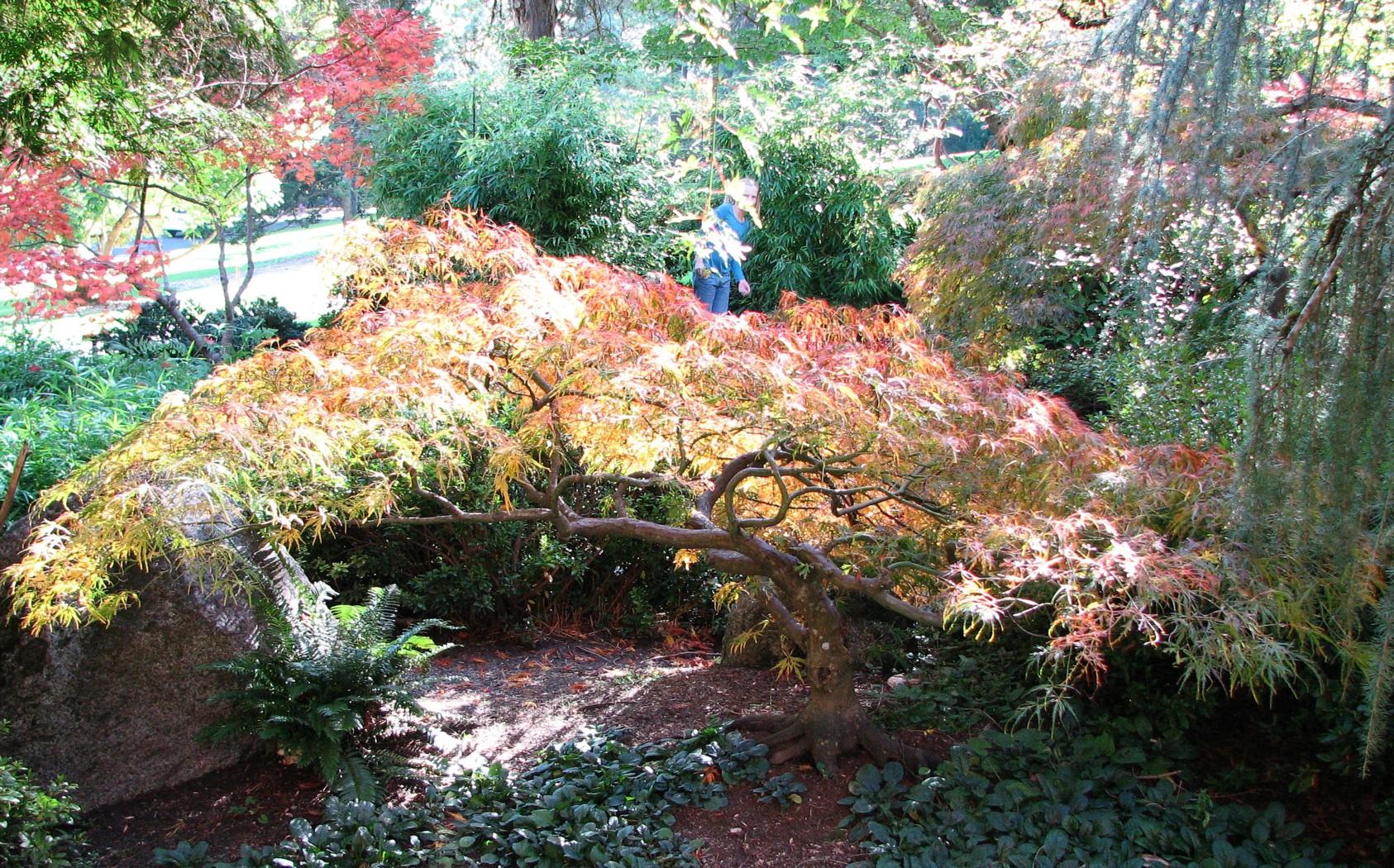 Japanese Gardens Lithia Park Ashland Oregon