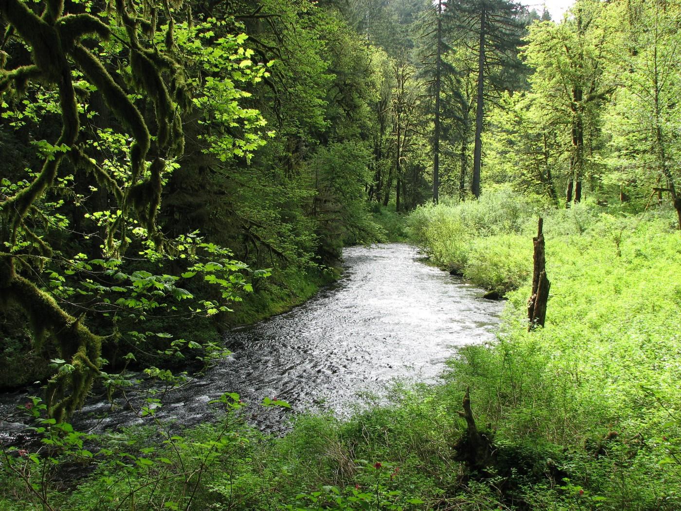 Trail of Ten Falls Silver Falls Oregon