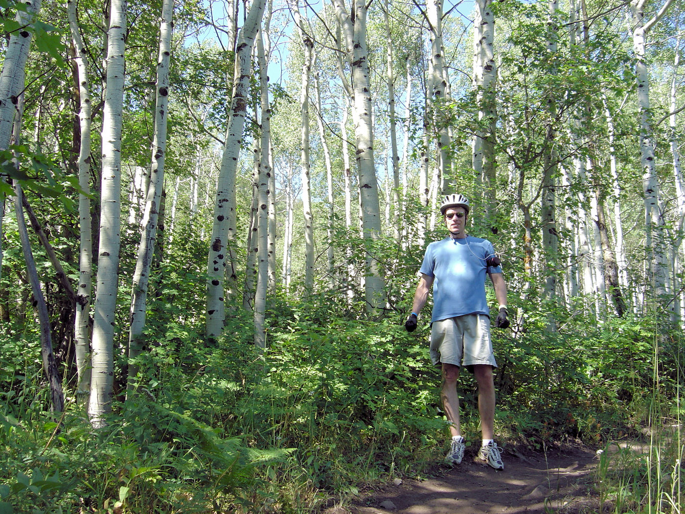 mountain biking in aspen trees