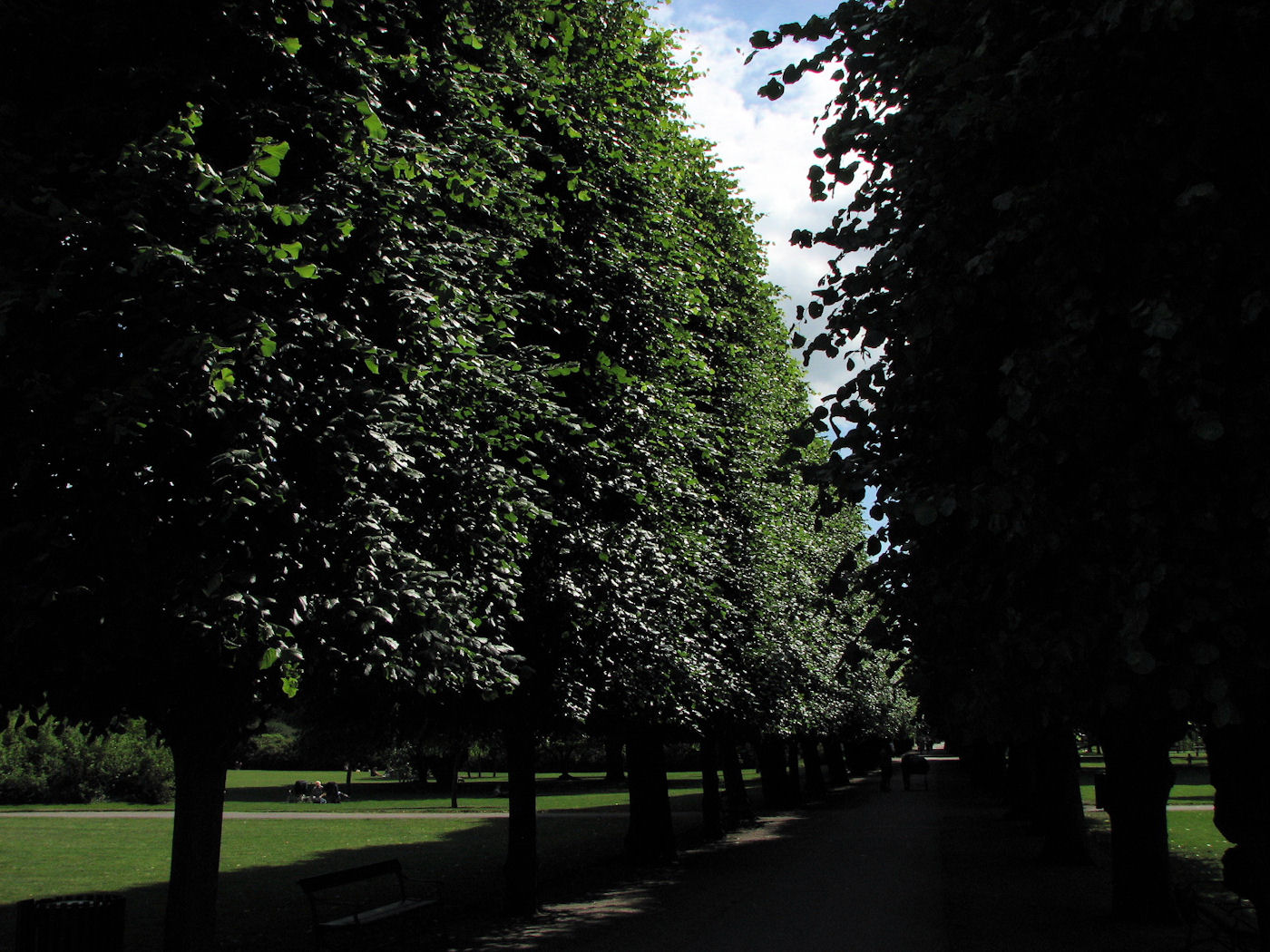 Tree-lined paths at Kongens Have