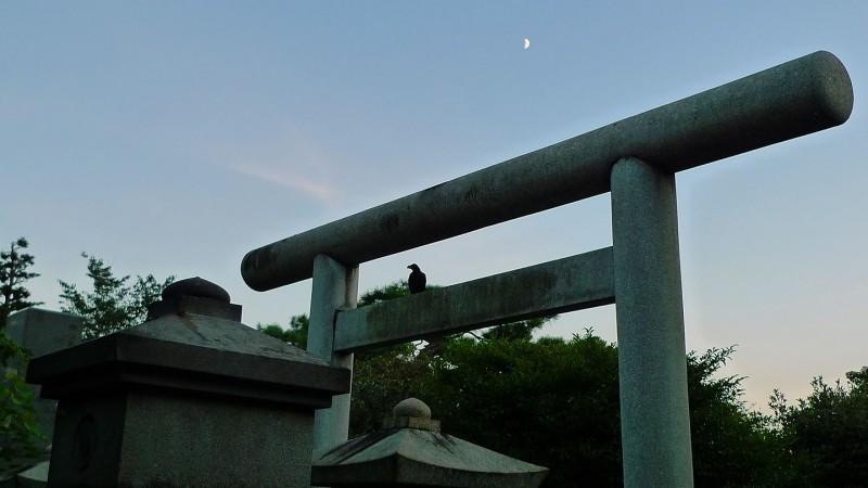 Gokoku-ji 護国寺 japanese cemetery torii crow tokyo japan