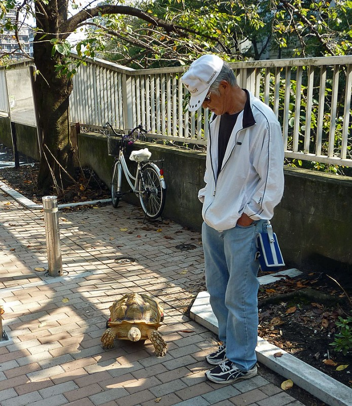 tokyo man out for a walk with his pet Tortoise