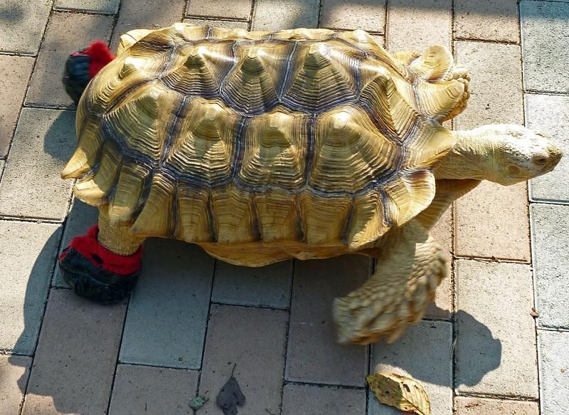 pet turtle Tortoise tokyo japan