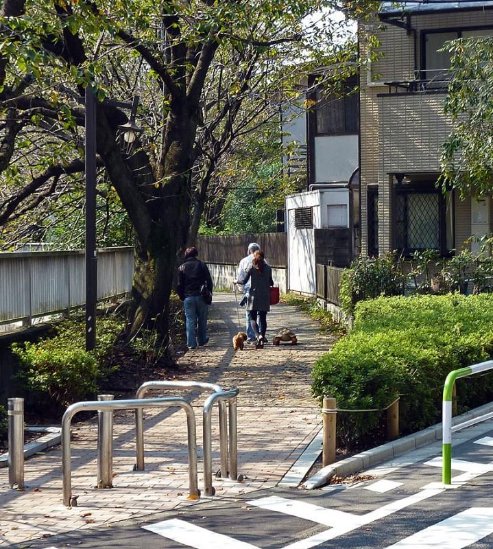 tokyoites walking their pets along the kanda river 神田川