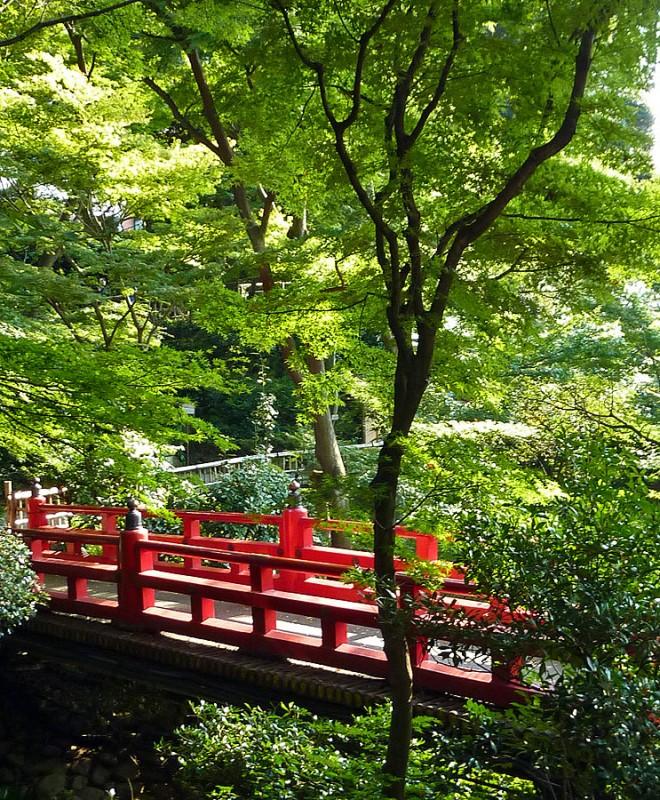 japanese bridge maples chinzanso tokyo japan