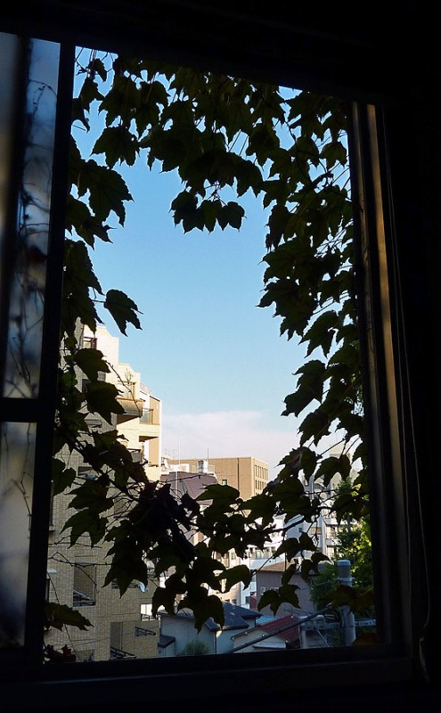 view of ivy out waseda university office window tokyo japan