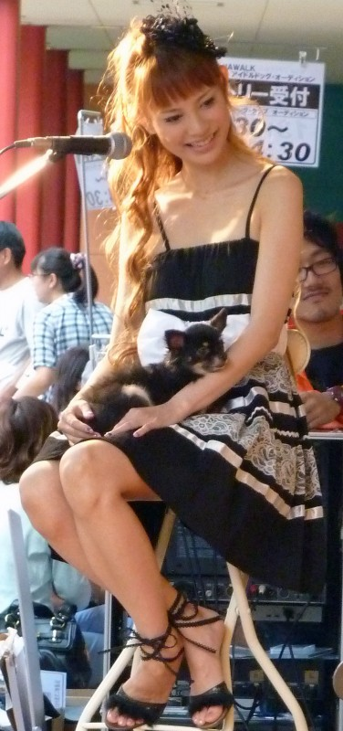 japanese model with small lap dog