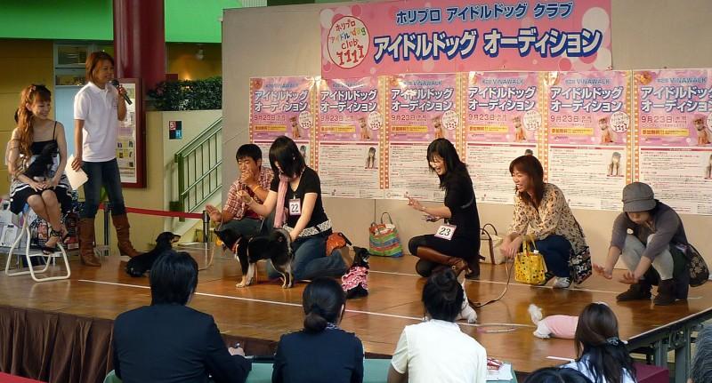 ebina japan dog show