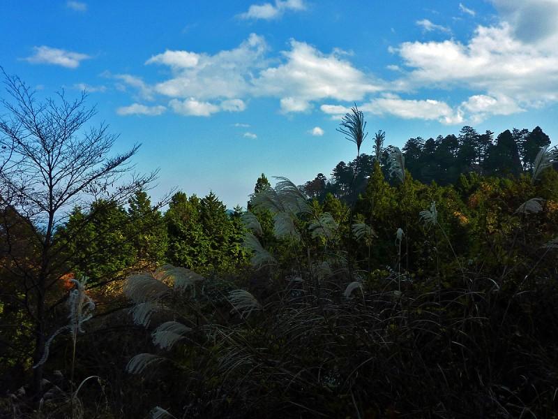 susuki tokyo mountains