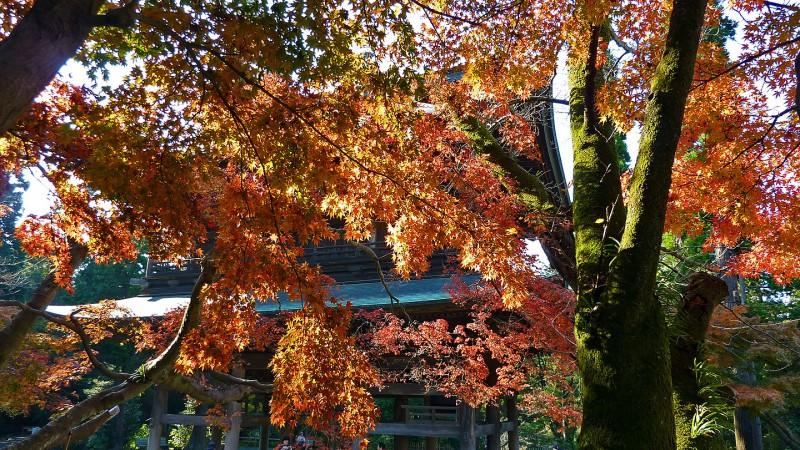 engakuji fall foliage autumn colors