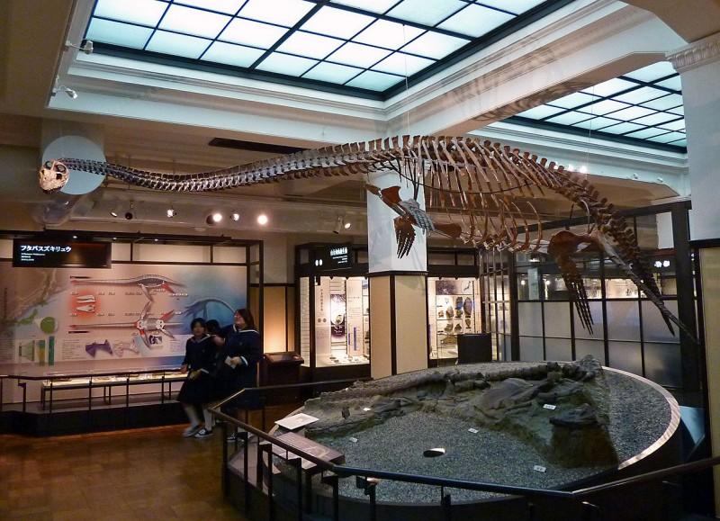 ueno tokyo japan national museum science nature plesiosaur futabasaurus