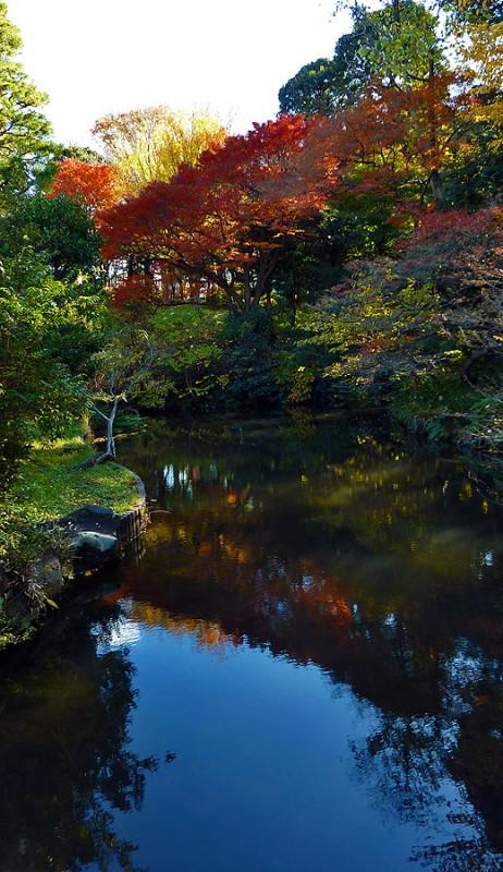 Kansenen Koen koyo fall colors autumn foliage tokyo japan