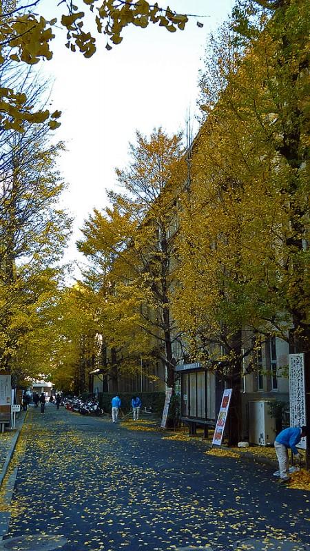 waseda university campus grounds crew raking leaves tokyo japan
