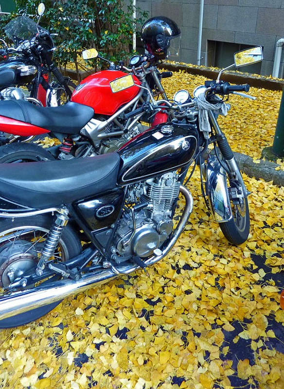 college student motorcycles waseda university tokyo japan fall leaves foliage