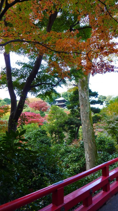 four seasons hotel tokyo japan pagoda chinzanso fall japanese maple leaves