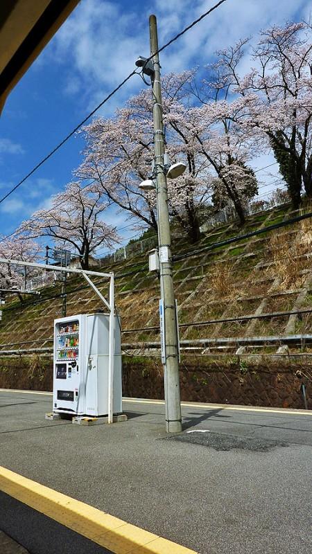 jidohanbaiki cherry blossoms blue sky kai-yamato station