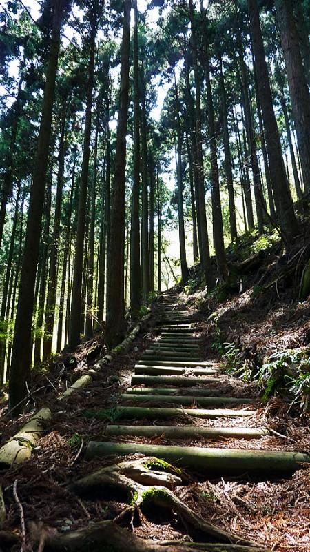 櫟山 kunugiyama